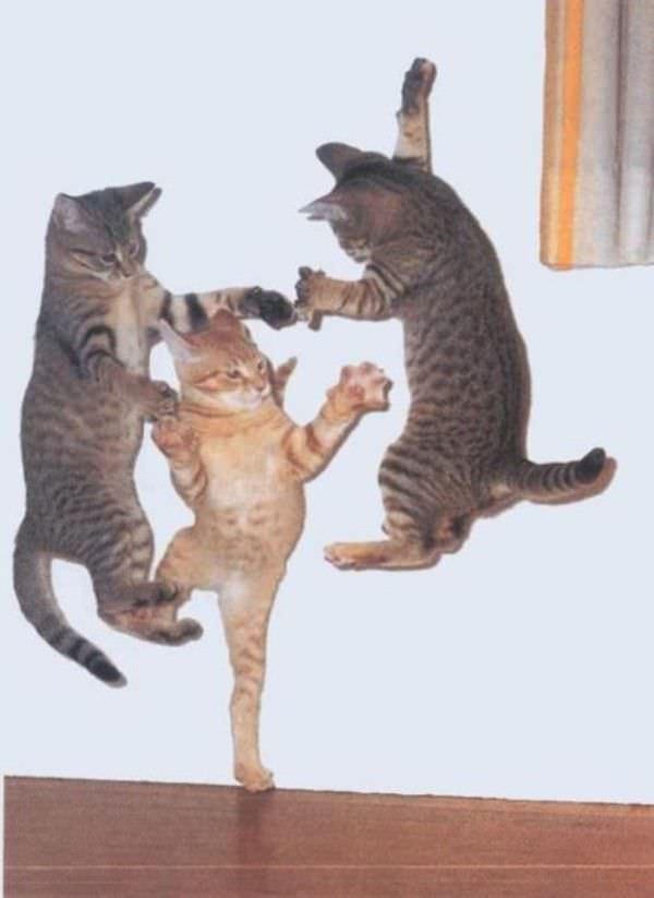 Incredible Dancing Cats