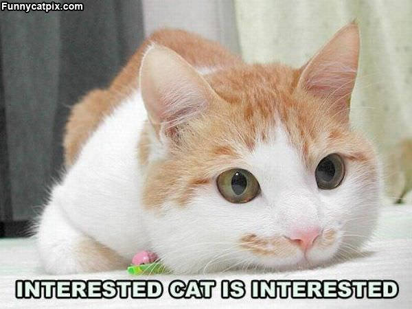 Interested Cat