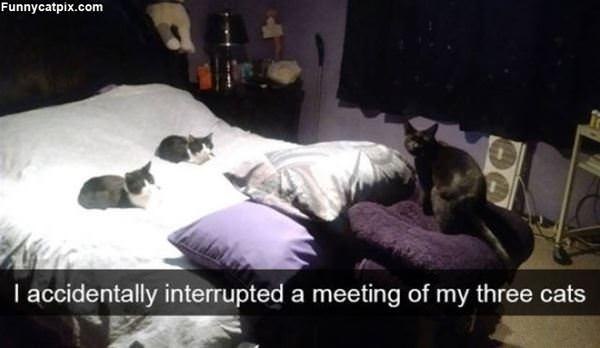 Interrupted A Meeting Of Cats
