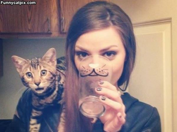 Is That A Cat Cup
