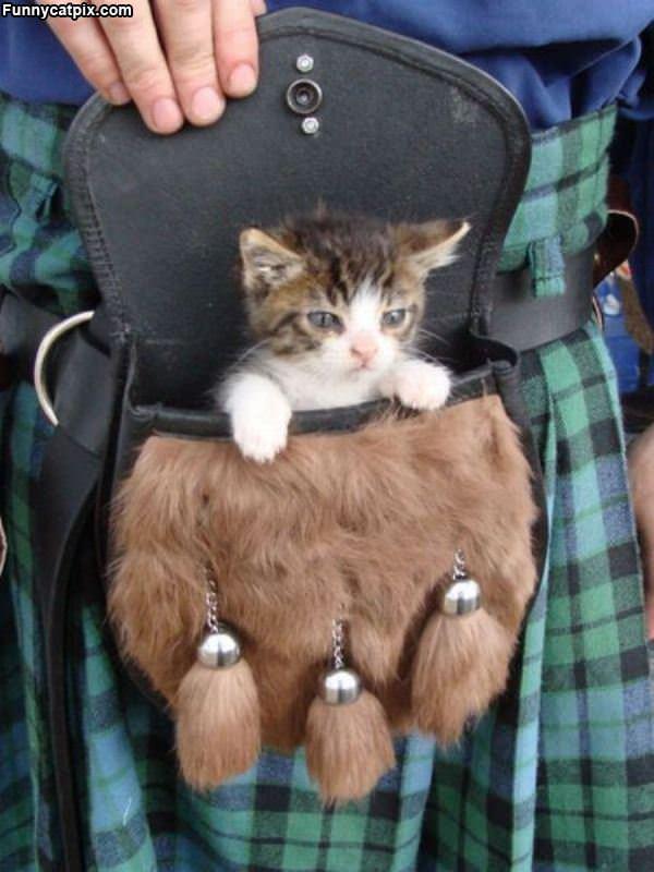 Its A Kitten Bag
