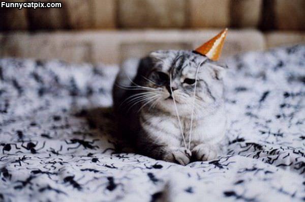 Its Mah Birthday