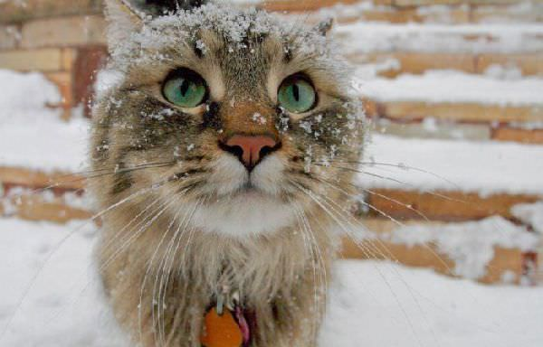 http://www.funnycatpix.com/_pics/Its_Snowing.jpg