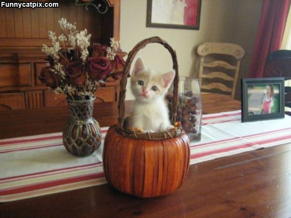 Iz A Pumpkin
