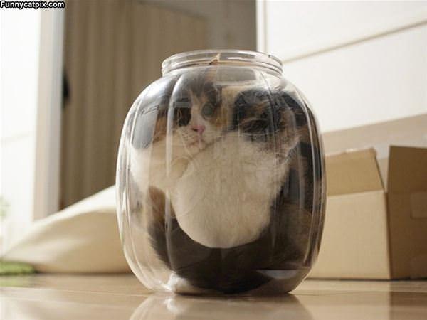 Jar Of Cat
