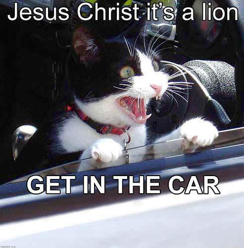 jesus christ its a lion