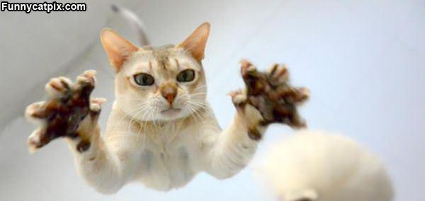 飞猫扑雪 - 雪山 - .