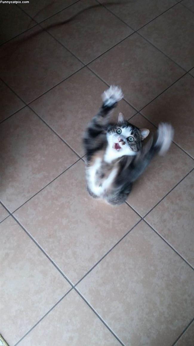 Jump Up Jump Up
