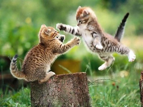Jumping Attack