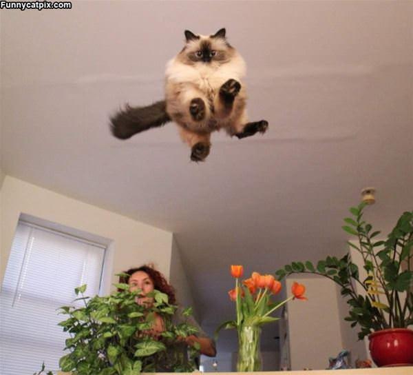 Jumping For Big Joy