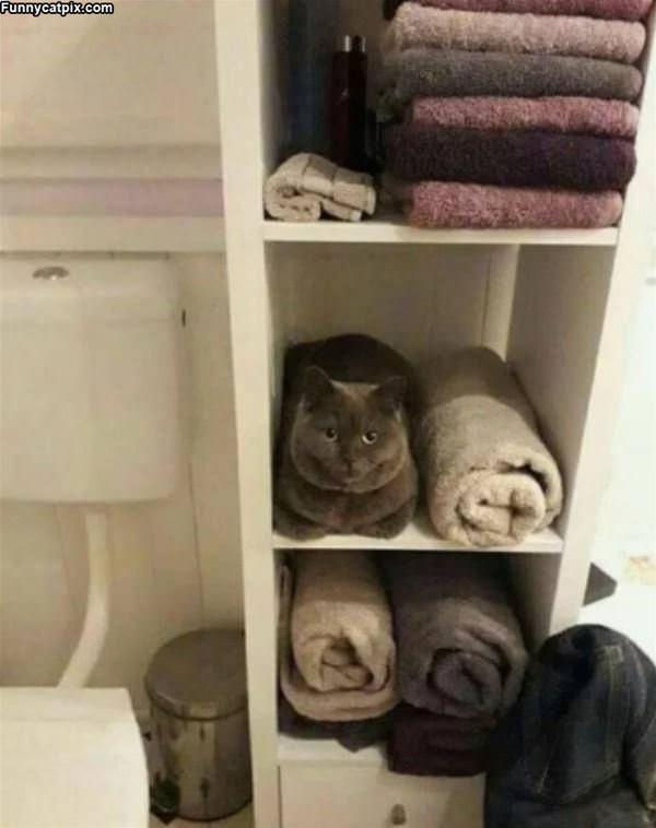 Just A Towel