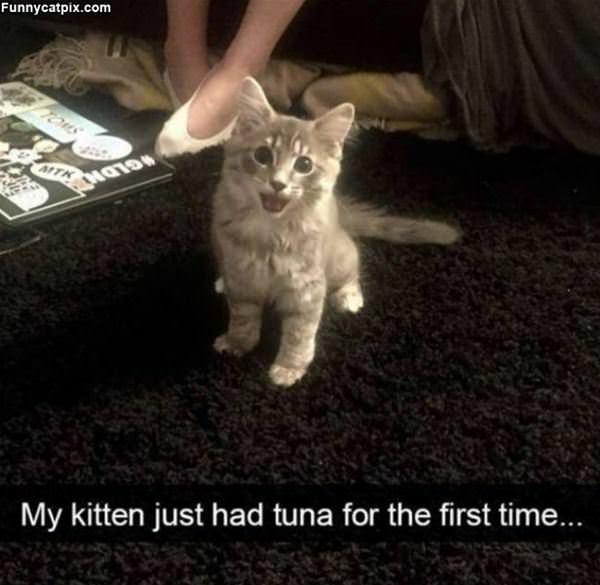 Just Had Some Tuna