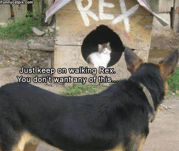 Just Keep Walking Rex