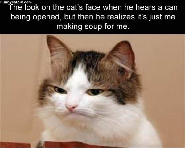 Just Opening Soup