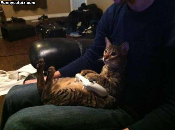 Just Playing Some Xbox
