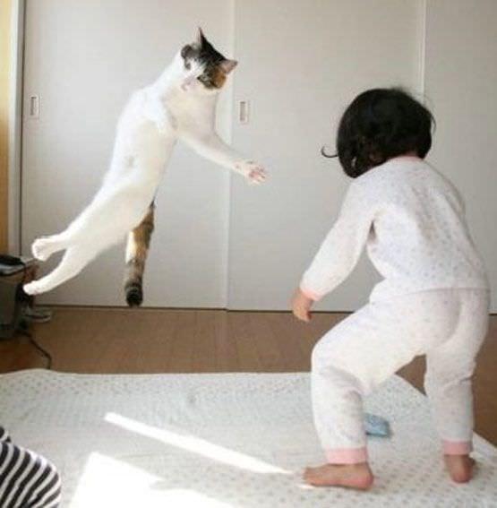 Karate Chop Cat