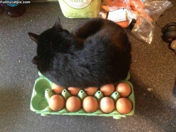 Keeping My Eggs Warm