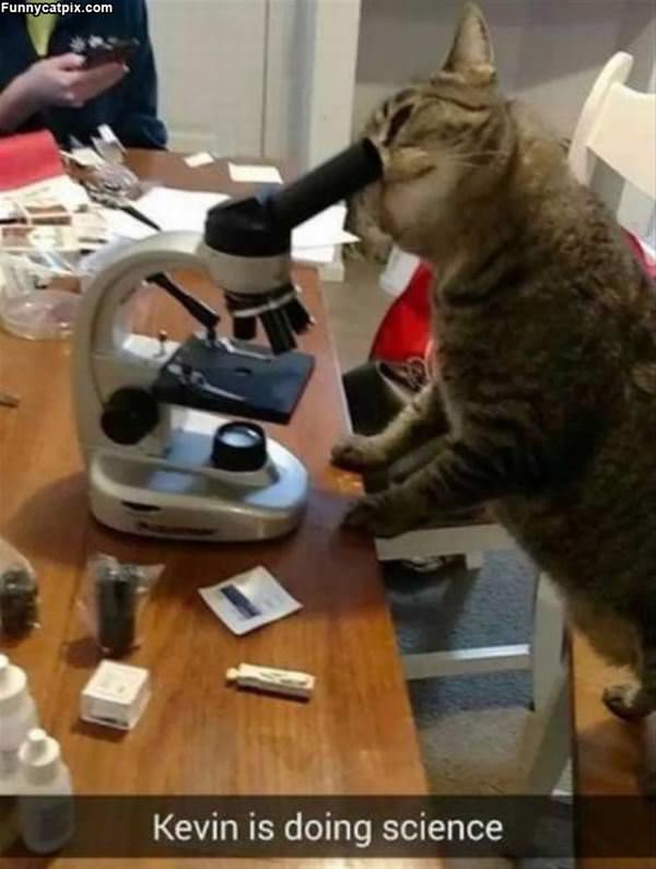 Kevin Is Doing Science