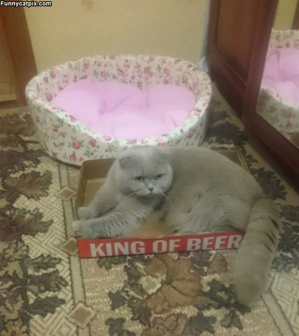 King Of Beer Box