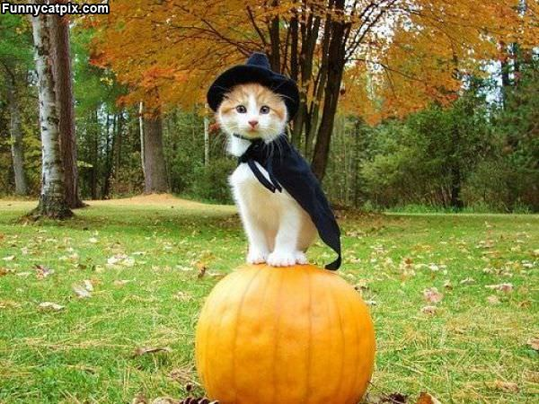 King Of This Pumpkin
