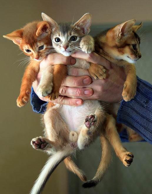 Kitten 3 Pack