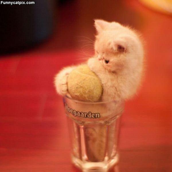 Kitten And Ball