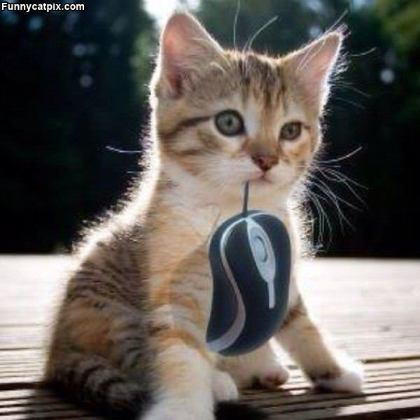Imagem do dia - Página 36 Kitten_And_Mouse