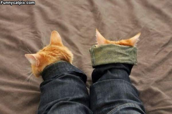Kitten Capes