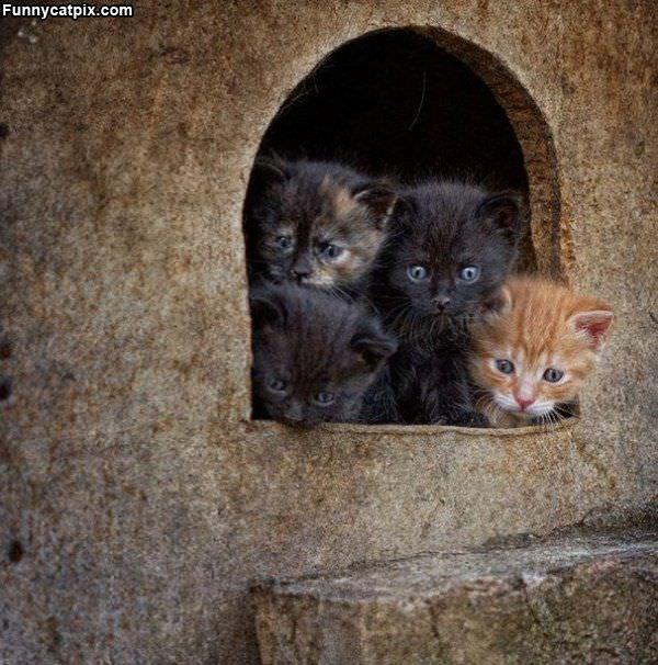 Kitten Cave