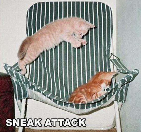 Sneak Attack Kitten