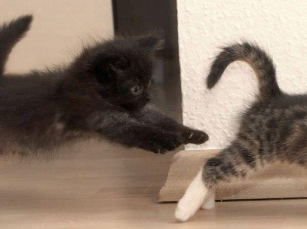 Kitten Chase