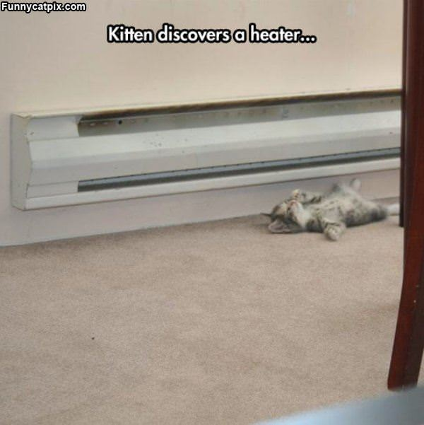 Kitten Finds The Heater