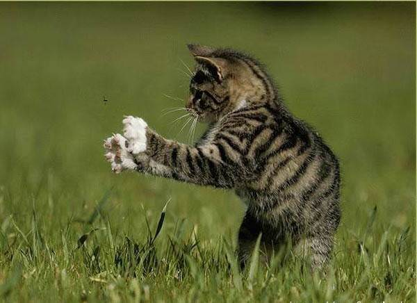 Kitten Fly Catcher