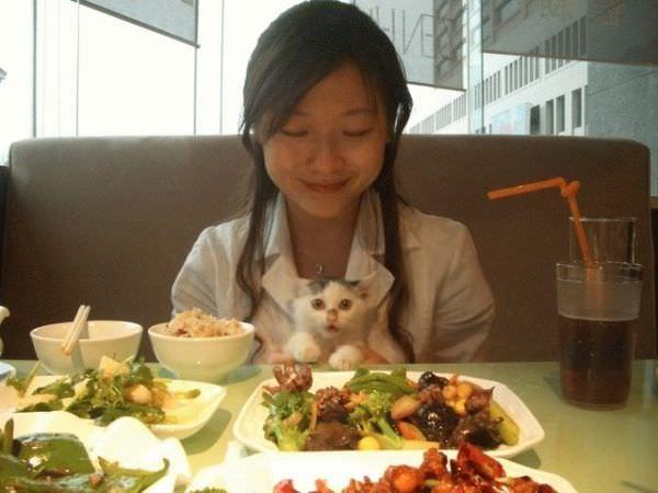 Kitty Dinner