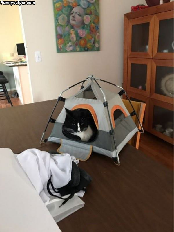 Kitty Has A Tent