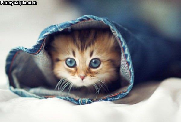 Kitty In The Jeans