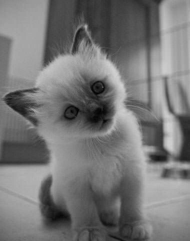 Kitty Is Cute