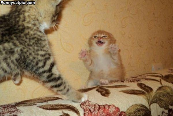Kitty Is Not So Happy