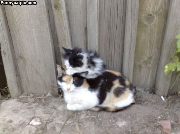 Kitty Stackers