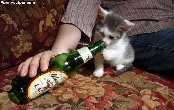 Kitty Wants Some Beer