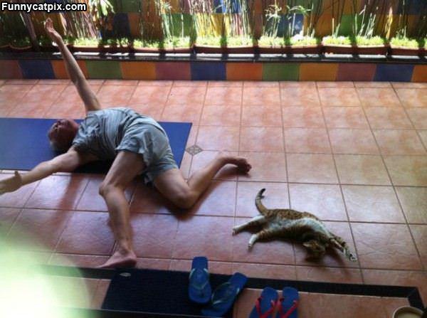 Kitty Yoga Time