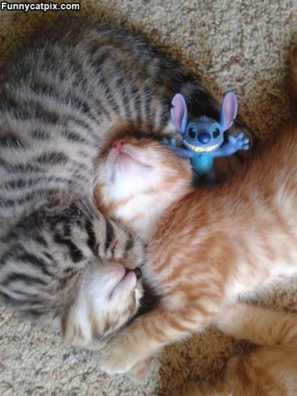 Kittys Keeping Warm