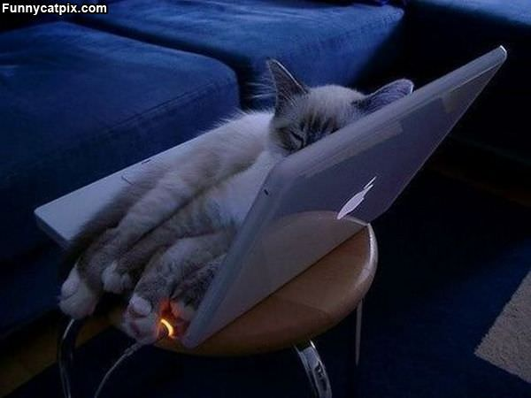 Laptop Bed