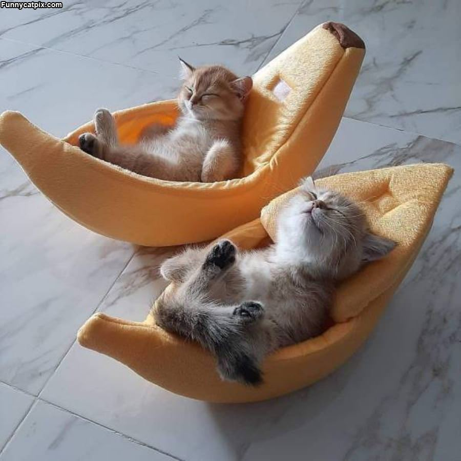 Laying Around Relaxing