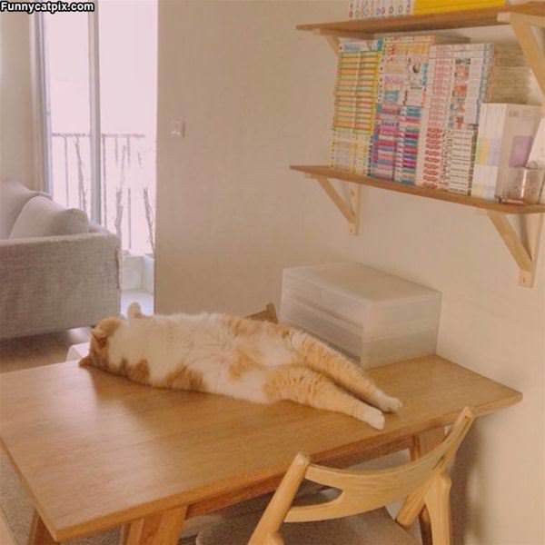 Laying On The Table