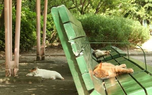 Lazy Cat Park