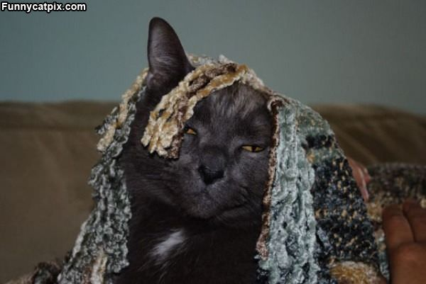 Lazy Hiding Cat