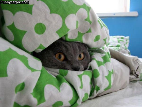 Leave Me Alone Im Hiding