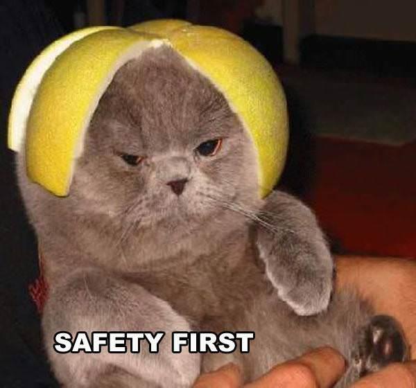 Lemon Helmet Cat