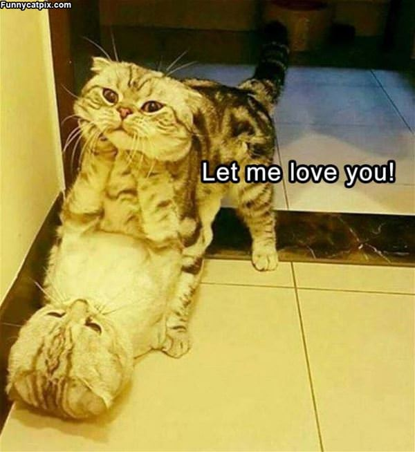 Let Me Love You